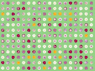 整列するたくさんのコスモスの花のイラスト素材 [FYI01415968]