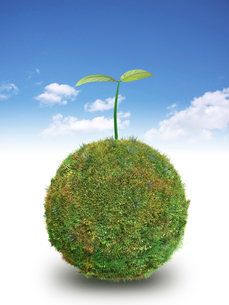 青空背景に草の球体の上に新芽のイラスト素材 [FYI01416763]