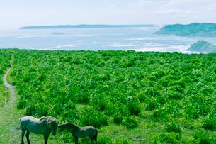 海岸線と馬の親子の写真素材 [FYI01416832]