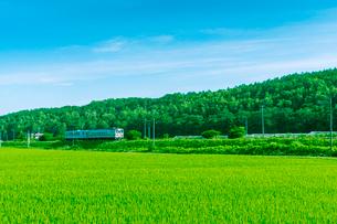 水田と富良野本線の写真素材 [FYI01416882]