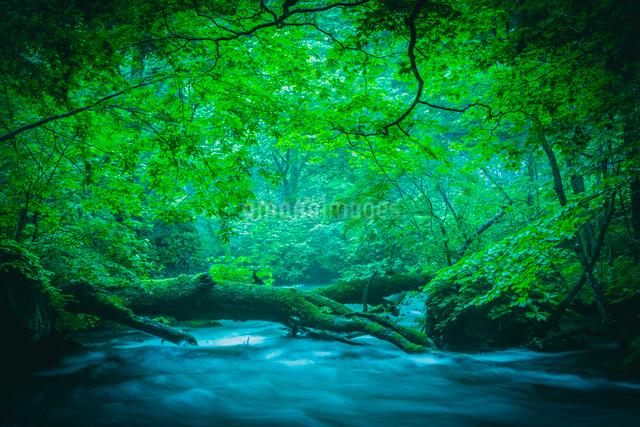 野趣を抜け下る渓流の写真素材 [FYI01416949]