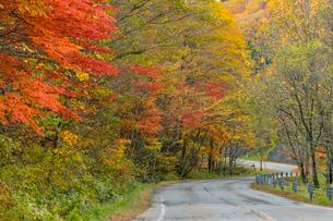 紅葉と道路の写真素材 [FYI01417092]