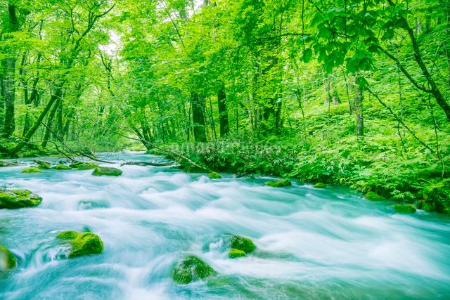 緑の森と奥入瀬渓流の写真素材 [FYI01417195]