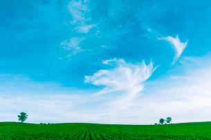 湧き上がる夕暮れ雲と親子の木の写真素材 [FYI01417285]