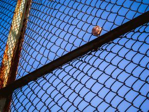 フェンスにはまったボールの写真素材 [FYI01417385]
