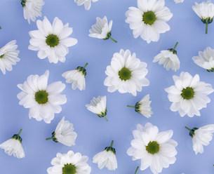 花イメージの写真素材 [FYI01417661]
