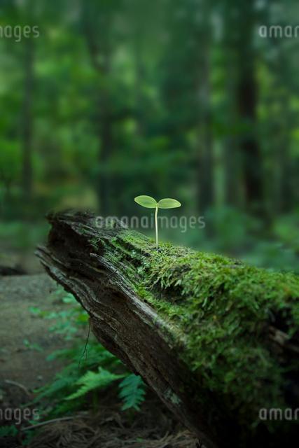 原生林に生える若葉の写真素材 [FYI01417702]
