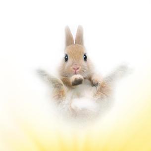 飛び上がるポーズのウサギの写真素材 [FYI01417720]