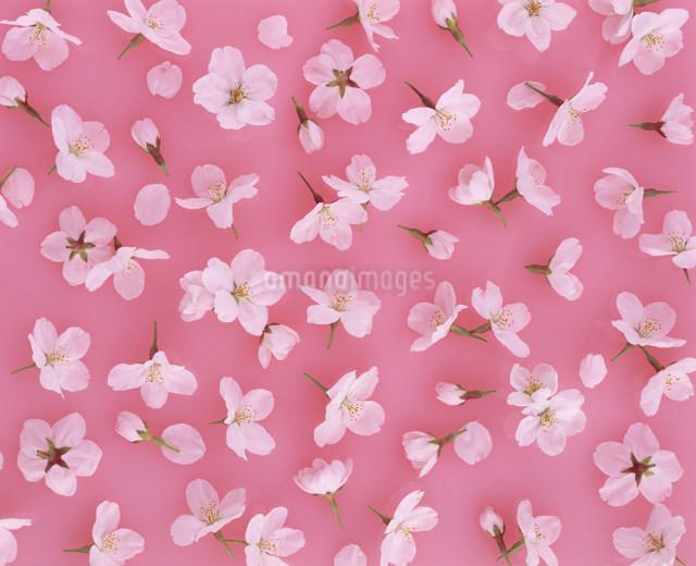 花イメージの写真素材 [FYI01417723]