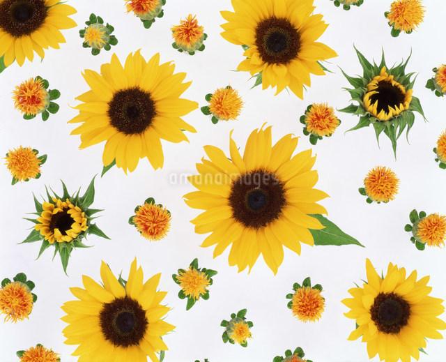 花イメージの写真素材 [FYI01417787]