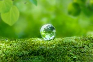 森の中の地球儀の写真素材 [FYI01418006]