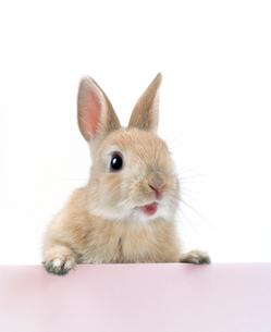 塀の上に手をつくウサギの写真素材 [FYI01418012]