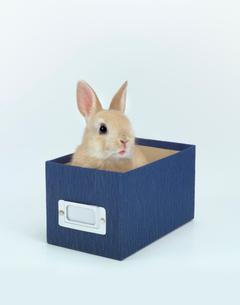 箱に入ったウサギの写真素材 [FYI01418018]