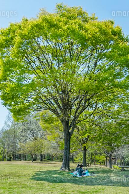新緑の木の下でくつろぐ母子の写真素材 [FYI01418166]
