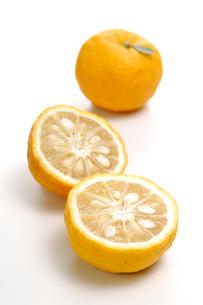 柚の写真素材 [FYI01418183]