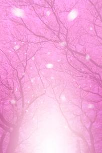 風に舞う桜のピンクイメージの写真素材 [FYI01418226]