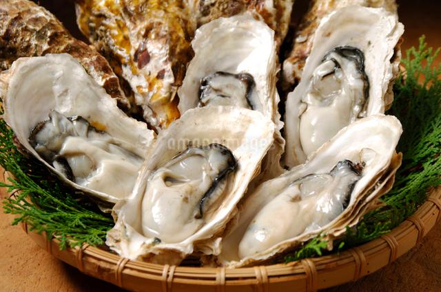 生牡蠣の写真素材 [FYI01418367]
