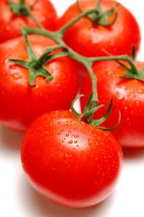 枝付きトマトの写真素材 [FYI01418447]