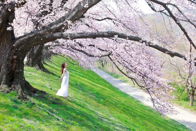 桜の木の下で深呼吸する女性の写真素材 [FYI01418495]