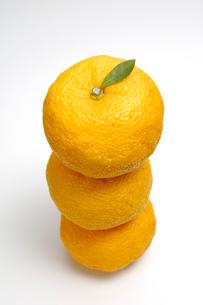 柚三個の写真素材 [FYI01418783]