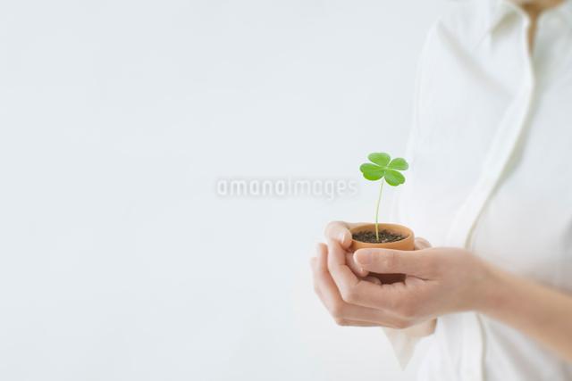 四葉のクローバーの鉢植えを持つ手の写真素材 [FYI01418825]
