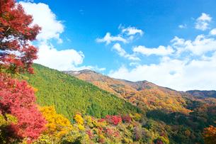 紅葉した山の写真素材 [FYI01419421]