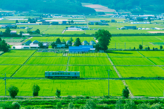 田畑の間を進む富良野線の写真素材 [FYI01419574]
