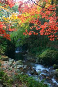渓流と紅葉の写真素材 [FYI01419608]
