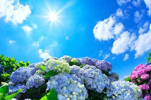 アジサイと青空と雲の写真素材 [FYI01419619]