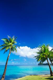 タモンビーチとヤシの木の写真素材 [FYI01419648]