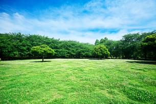 公園の樹木と青空の写真素材 [FYI01419690]