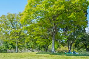 新緑の木の下でくつろぐ母子の写真素材 [FYI01419709]