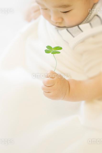 四つ葉のクローバーを手に持つ赤ちゃんの写真素材 [FYI01419844]