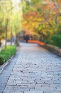 京都祇園白川の町並と石畳の道の写真素材 [FYI01419952]