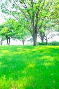 緑の芝生と樹木の写真素材 [FYI01420118]
