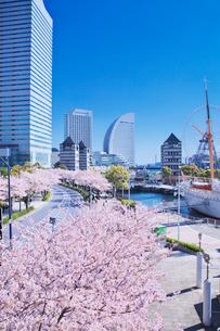 横浜みなとみらい21と桜の写真素材 [FYI01420352]