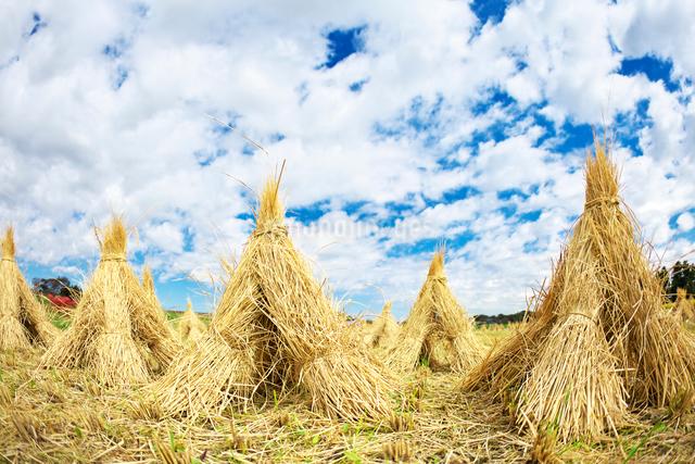秋の空と稲藁の写真素材 [FYI01420425]