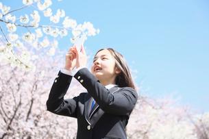 桜の下で写真を撮る女子中学生の写真素材 [FYI01420665]