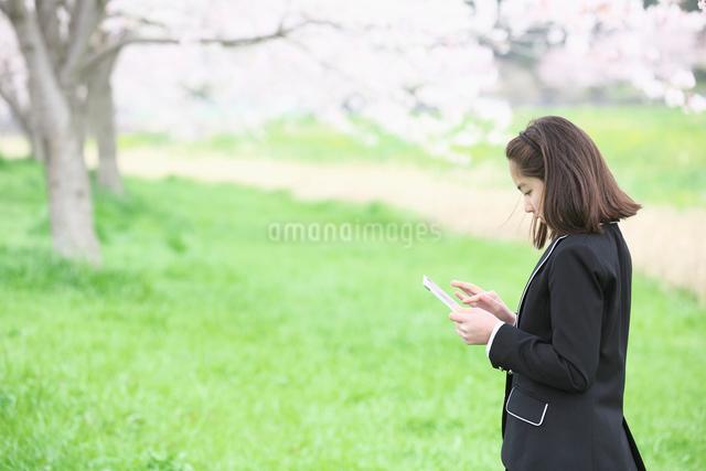 桜並木の下でタブレットを操作する女子中学生の写真素材 [FYI01420673]