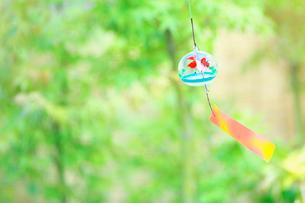 庭の緑と風鈴の写真素材 [FYI01420747]