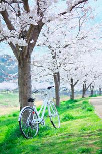 桜並木と自転車の写真素材 [FYI01420910]