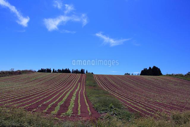 山本山から望む野菜畑の写真素材 [FYI01421387]
