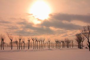 ハサ木立つ朝の田園風景の写真素材 [FYI01421416]
