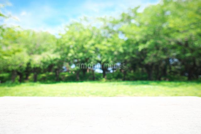 木のテーブルと緑の背景の写真素材 [FYI01421695]
