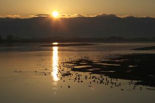 瓢湖を泳ぐ白鳥の群れの写真素材 [FYI01422064]