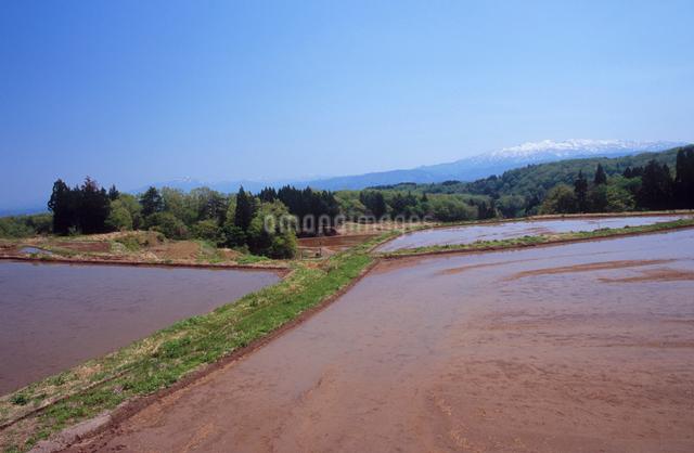 水田と残雪の守門岳の写真素材 [FYI01422126]