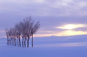 ハサ木の雪景色の写真素材 [FYI01422290]