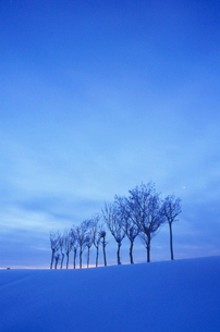 ハサ木の雪景色の写真素材 [FYI01422378]