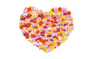 ハート並んだ蘭の花の写真素材 [FYI01422559]