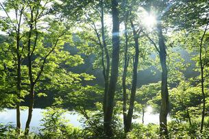 妙高高原の池と太陽光の写真素材 [FYI01422722]